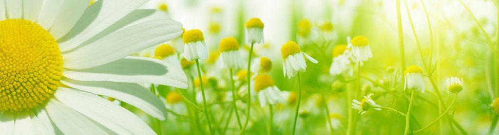 flowerswd